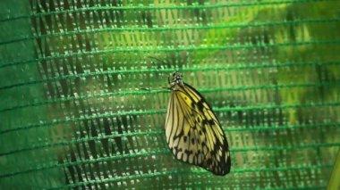 Hermosa mariposa — Vídeo de stock