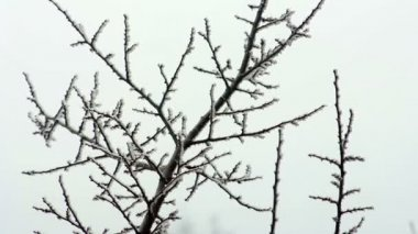 Winter tree branches — Stock Video