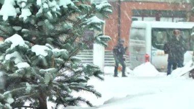 çamın dalları ile kar — Stok video