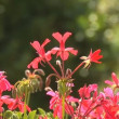 Stock Video: Beautiful summer flowers