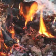 Camp fire — Stock Video