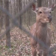 Stock Video: Deer