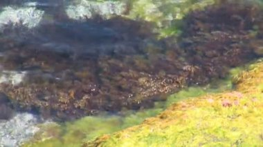 Sea algae in the water — Video Stock