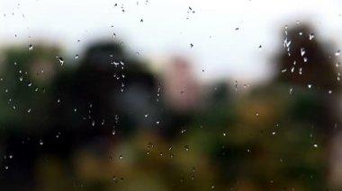 Krople deszczu na szybie — Wideo stockowe