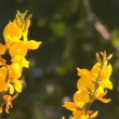 Yellow flowers — Stock Video #12593325