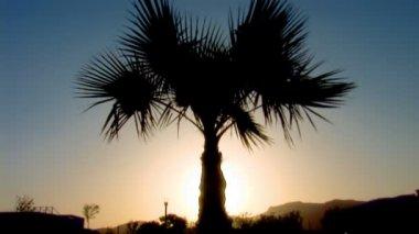 Palm tree — Stock Video