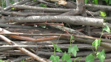 Sticks and twigs — Video Stock