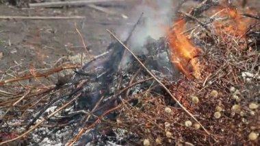 Brennendes blatt — Stockvideo