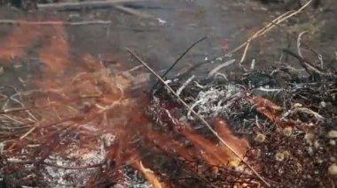Burning leaves — Stock Video