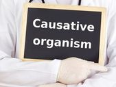 Doctor shows information: causative organism — Stock Photo