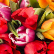 Closeup of tulips — Stock Photo