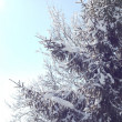 Stock fotografie: Fir tree covered with snow