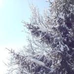 karla kaplı çam ağacı — Stok fotoğraf