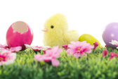 Chick on grass with flowers and easter eggs — Stock Photo