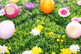 Have you seen the Easter bunny? — Stock Photo