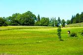 Beautiful green meadows in landscape — Stock Photo