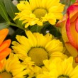 Cutout of beautiful and colorful bouquet — Lizenzfreies Foto