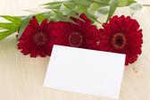 Deseando feliz cumpleaños con estas hermosas gerberas rojas — Foto de Stock