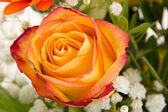 Red orange rose in beautiful bouquet — Stock Photo