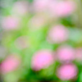 Abstract blur background green and pink colour — Stock Photo