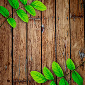 古い木製の背景に緑色の葉 — ストック写真