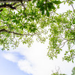 Panoramic Green leaves on sky background — Stock Photo