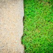 Fresh green grass on sand stone background — Stock Photo