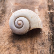 Complete dirty Nautilus Shell on wooden background — Photo