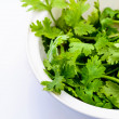 Stock Photo: Coriander