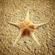 Starfish in the beach sand - copy space — Stock Photo