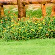 Fence with pretty flowers in a yard — Stockfoto