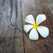 Close up of frangipani flower or Leelawadee flower on the table — Stock Photo