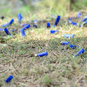 HUA HIN,THAILAND-NOVEMBER 15: empty shooting cartridges on the g — Stock Photo