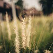 Bahar ya da yaz arka plan ile yeşil çim ve ılık ışık. — Stok fotoğraf