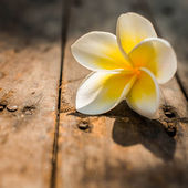 Leelawadee flowers placed on a the wooden floor with natural lig — Stock Photo