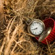Pocket watch in red box on bird nest. — Stock Photo #40660983