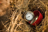 Pocket watch in red box on bird nest. — Stock Photo