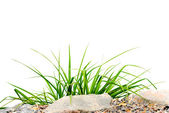 Small, round patch of fresh grass — Stock Photo