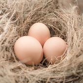 Eieren in nest van de vogel, natuurlijk licht. — Stockfoto