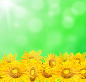 Sunflower with beautiful summer background — Stock Photo