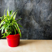 Red pot with green plant on table. — Stockfoto