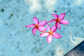 Flower in the swimming pool. — Stock Photo