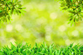 Green grass natural background with selective focus — Stock Photo