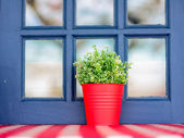 Red colored hand made flower pot out of a window of a house — Stock Photo