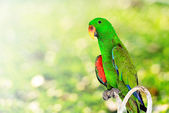 Green parrot macaw with bokeh background — Stock Photo