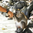 The monkey drinks a drink from a bottle — Stock Photo