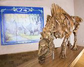 Unique in the world a skeleton of a unicorn (Elasmotherium cauca — Stockfoto