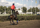 ROSTOV-ON-DON, RUSSIA-SEPTEMBER 22 - The rider rides a horse wit — Stock Photo