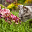 Royalty-Free Stock Photo: Cat and orchid