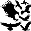 Birds of prey (eagle, hawk, falcon, griffon vulture etc.) vector silhouettes on white background. Layered. Fully editable — Stock Vector #14169937